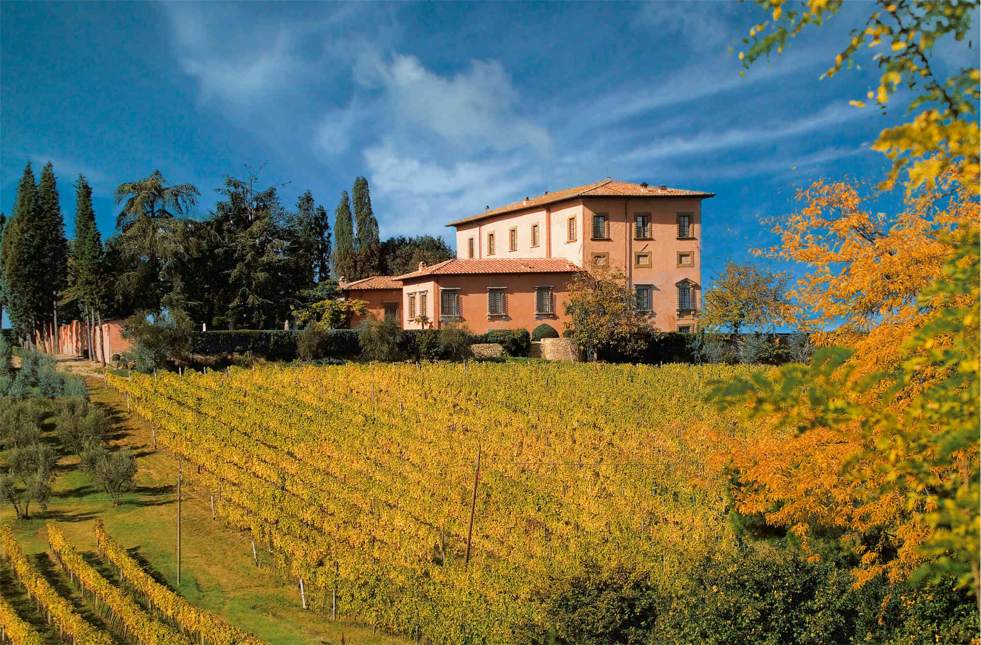Mangiacane-Vineyards2-s